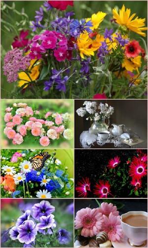 Обои для рабочего стола красивые цветы (Часть 13)
