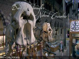����� ���������. ������� ���������� ���� / David Attenborough's Natural Curiosities [1 �����] (2012) WEB-DLRip 720p �� CSS