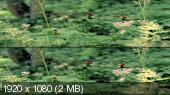 Без черных полос (На весь экран) Букашки. Приключение в Долине муравьев в 3Д / Minuscule - La vallee des fourmis perdues 3D Вертикальная анаморфная