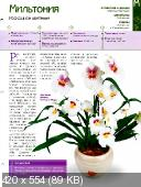 Комнатные и садовые растения от А до Я (№37 / 2014)