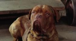 Тернер и Хуч / Turner and Hooch (1989) BDRip | КПК