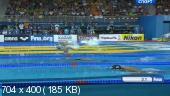 Плавание. Чемпионат мира на короткой воде - 2014. Доха (Катар) / День четвертый [06.12] (2014) SATRip
