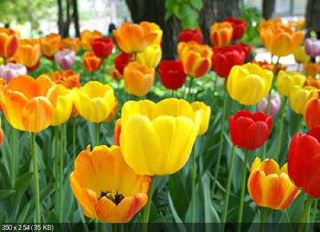 Цветы из гофрированой бумаги 378499c52b157f71b2886a95e628e2bf