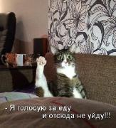 Позитивные котэ 11.01.15
