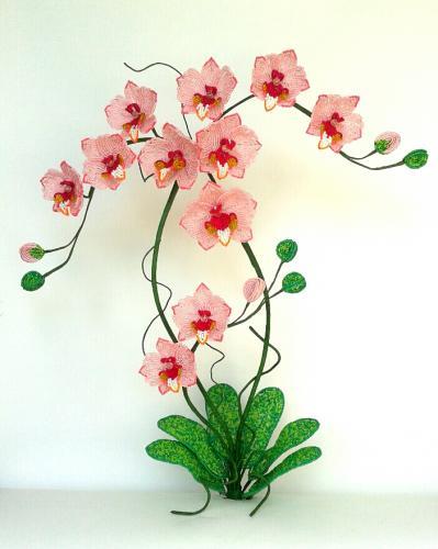 """Поздравляем победителей конкурса """"Оранжерея. Орхидеи""""! Aad0f9252af06f435749dbbe887656ad"""