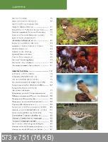 Красная книга. Птицы России (2013)